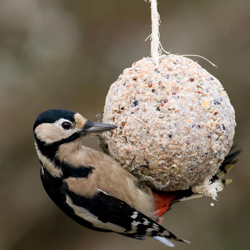 30dayswild day 8 how to make homemade vegan bird seed fat balls with kai and anneka. Black Bedroom Furniture Sets. Home Design Ideas
