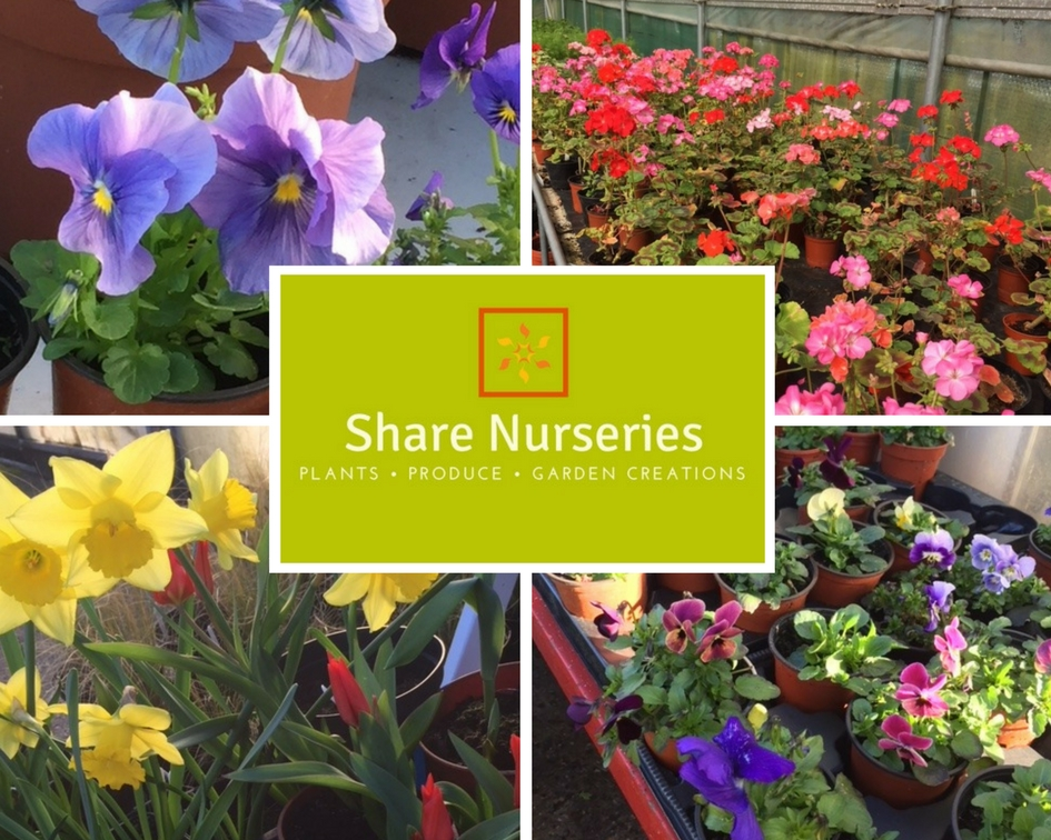 Share Nurseries